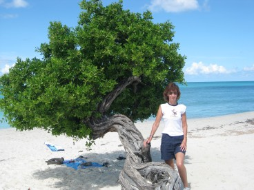 Divi tree Aruba